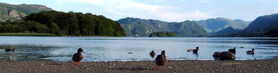 Ducks on Derwentwater shoreline